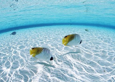 TOP AJ�NLATUNK! Mald�v-szigetek: Sun Island Resort & Spa 4*+, standard beach bungallow